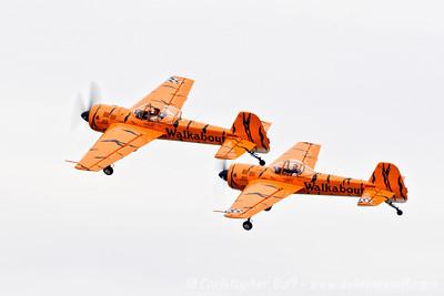 Walkabout Tigers  - By Christopher Buff, www.Aviationbuff.com