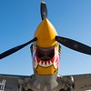 Hungry Tiger - 2017 Christopher Buff, www.Aviationbuff.com