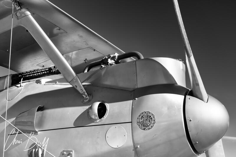 Albatross - 2017 Christopher Buff, www.Aviationbuff.com