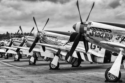 Mustangs at Rest