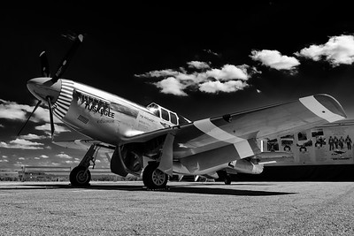 Red Tail Mustang in Black and White