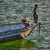 pelicans boat 7611