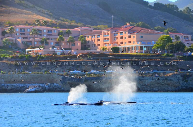 avila-whales_4491