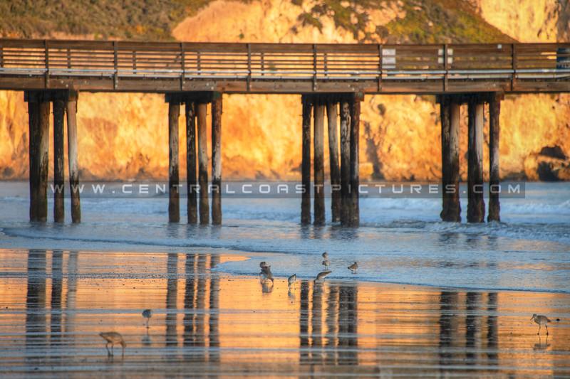 avila beach 1511-