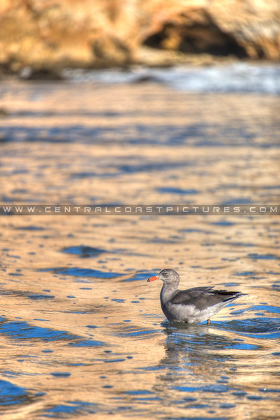 avila beach-2244-
