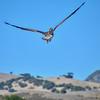 avila pelican 5070