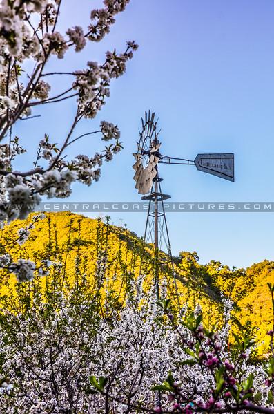 avila see canyon spring-3279