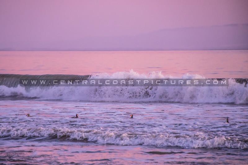 avila beach-8501601