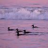 avila beach-8501606