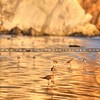avila-birds-reflections_4177
