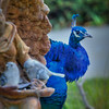 peacock 2792