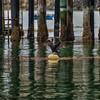 Avila harford pier 5171