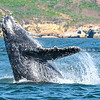 whale watching-7081