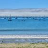 avila dog beach 5591