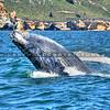 whale_7071