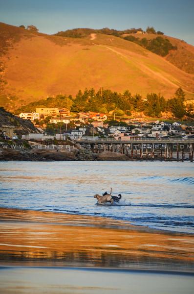 avila port dog beach-9020