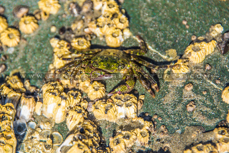 avila beach crab-2226