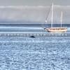 avila-boat-whale_4906-e