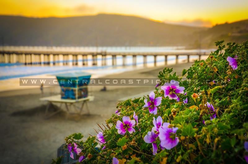 avila beach-3907