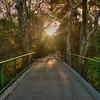 avila bridge sycamore 7625