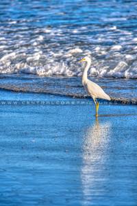 avila beach-2279-