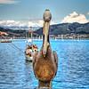 avila pelican 4244-