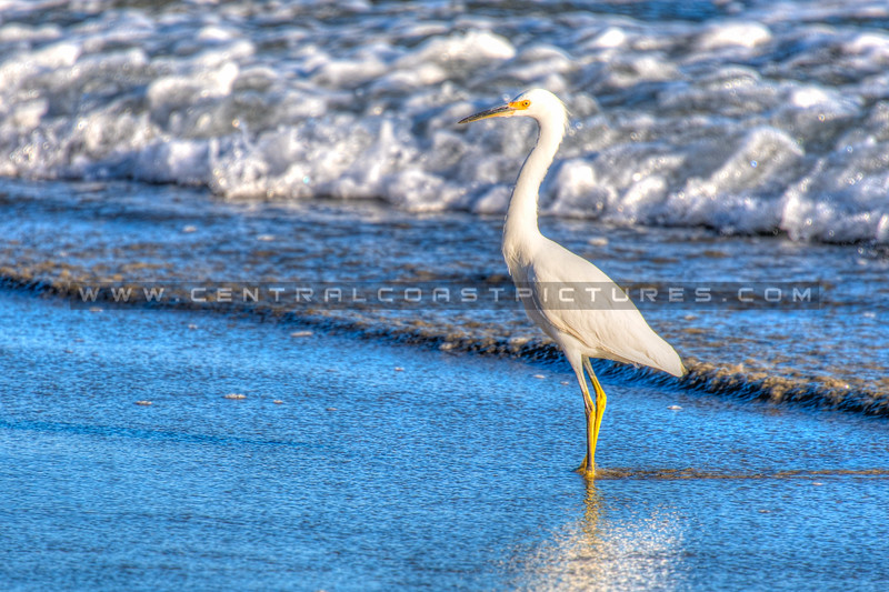 avila beach-2279-landscape-
