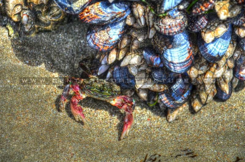avila-crab_0896