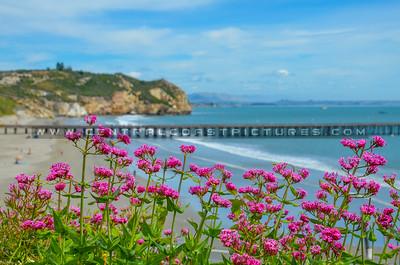 avila beach-5052