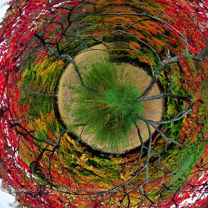 Aerial Arboretum: Venation