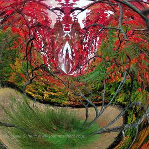 Aerial Arboretum: Portal