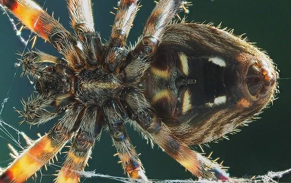 Spider stack