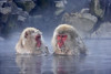 Japanese Snow Monkeys.  Naturescapes.net 2006 Wildlife Image of the Year