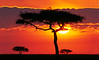 Acacia Trees silhouetted at sunrise, Masai Mara, Kenya
