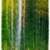 Door County Wisconsin - In the Woods