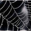 Spider Web - Door County, Wisconsin