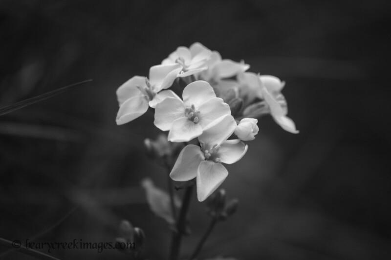 White Bunch<br /> <br /> Third Place, Plants/Flowers - Washington County Fair 2007