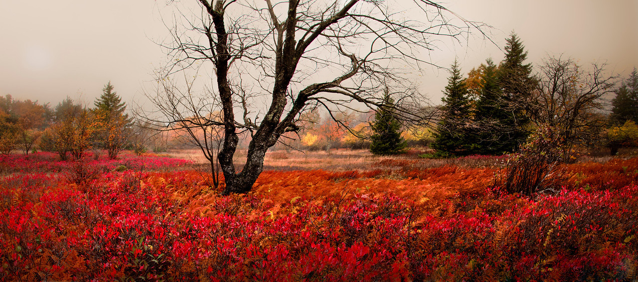 "Dolly Sods, Field with Tree - Augen 2013<br> <a href=""http://www.cqjournal.com/winners.html"">Published in Creative Quarterly Magazine Issue 30 Spring 2013</a>"