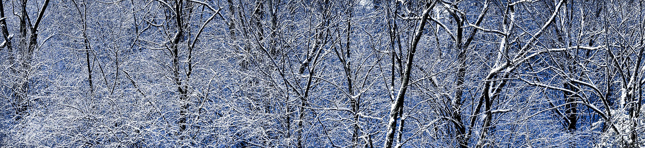 "Winter Trees - Augen 2011<br> <a href=""http://www.kellicutt.org/Shows/2013/DisplayBook/large-40.html"">Display Book of Kellicutt International Photo Show 2013</a>"