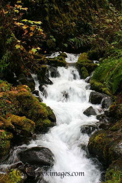 Wahkeena Creek Cascades<br /> <br /> Honorable Mention, Waterscape - Washington County Fair 2010
