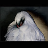 Sleeping Hen