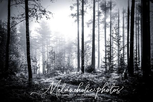 Award winning photos