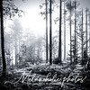 This month's winner is 1MP photographer Johanna Amnelin, with this lovely black & white rendering of mist through some tall forest trees in Salo, Finland