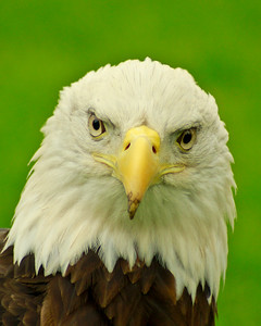 """Eagle Eyes""  November 2013 - MVPC Pro Digital Open"