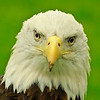 """Eagle Eyes""<br /> <br /> November 2013 - MVPC Pro Digital Open"
