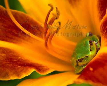 """""""Daylily Frog""""  2nd Place - April 2012  - MVPC Print"""