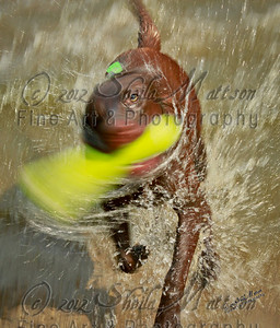 """Eye of the Storm""  *  3rd Place - October 2012 - MVPC Motion Blur Pro Dig"