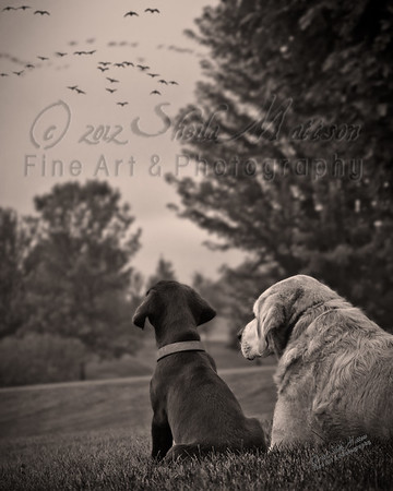 """""""Bird Dog in Training""""<br /> <br /> *  Photograph of the Year 2012 - MVPC Print<br /> *  Best of Show - April 2012 - 9th Annual Monticello Photo Show (B/W)<br /> *  Best of Show - April 2012 - MVPC <br /> *  1st Place - April 2012 - MVPC Print<br /> *  Merit - March 2012 - N4C"""