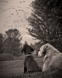 """Bird Dog in Training""  *  Photograph of the Year 2012 - MVPC Print *  Best of Show - April 2012 - 9th Annual Monticello Photo Show (B/W) *  Best of Show - April 2012 - MVPC  *  1st Place - April 2012 - MVPC Print *  Merit - March 2012 - N4C"