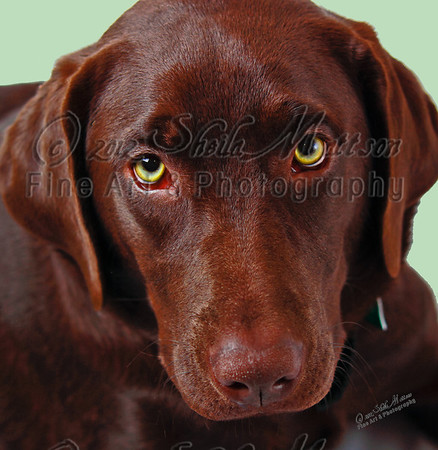 """Puppy Eyes""<br /> <br /> *  3rd Place - May 2012 - MVPC Print"